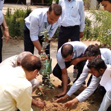 5000 Plants To Expand Green Cover Sanjeevani Project By Mobius Foundation